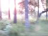 image_0313
